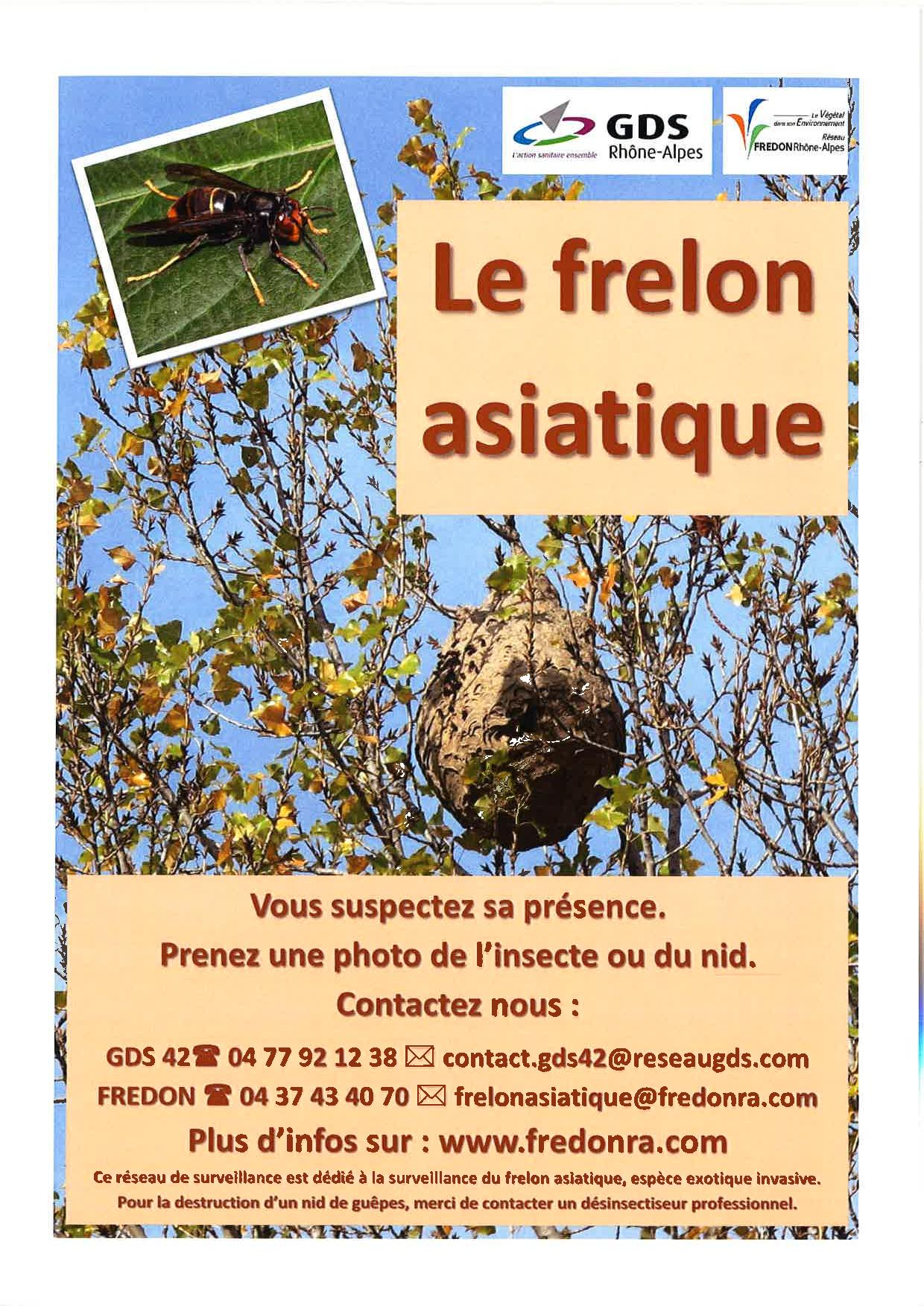 img-frelon-asiatique